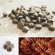 Café Erable et Noix de Pécan - 18 dosettes Senseo
